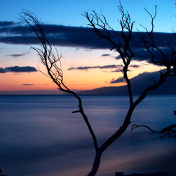 Create your style - a long exposure photograph of a branch in the Pacific ocean at sunset,in Maui