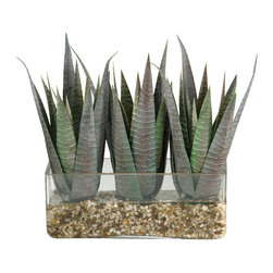 """D&W Silks - Artificial Striped Agave in Rectangle Glass - It's amazing how much adding a plant can change the look of a room or decor, but it can be difficult if your space is not conducive to growing plants, or if you weren't exactly born with a """"green thumb."""" Invite the beauty of nature into your home without all the upkeep with this maintenance-free, allergy-free arrangement of artificial striped agave in a rectangle glass. This is not a living plant."""