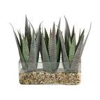 D&W Silks - D&W Silks Striped Agave In Rectangle Glass - Striped agave in rectangle glass