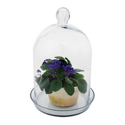 Achla - Glass Bell Jar Terrarium II - Made of clear Glass. Warranty: 90 days. Bell: 8.75 in. Dia. x 15 in. H. Dish: 10.5 in. Dia.. Overall Dimensions: 8.75 in. L x 10.5 in. W x 15 in. H (6 lbs.)Our clear Glass bell jars make perfect terrariums or covers to protect young plants from the cold. These replicas are based on 17th and 18th century garden cloches.