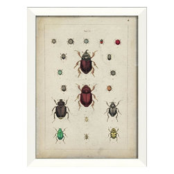 The Artwork Factory - 'Beetle Study II' Framed Artwork - Ready-to-Hang, 100% Made in the USA, museum quality framed artwork