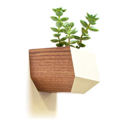 Revolution Design House - Sidecar Walnut, White - The Walnut and White Sidecar is the newest edition of the Boxcar series. The wall-mounted Sidecar is a succulent planter with a clear finish and a subtle accent of Bone-White. The geometric shape provides a nice contrast on any wall and gives your space a little addition of life. The installation is easy, only one screw goes directly in to your wall.