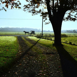 Stomping Grounds - Misty Mornin' - Taken on an early morning in Amish country