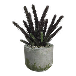 Silk Plants Direct - Silk Plants Direct Stapelia Cactus (Pack of 4) - Burgundy - Silk Plants Direct specializes in manufacturing, design and supply of the most life-like, premium quality artificial plants, trees, flowers, arrangements, topiaries and containers for home, office and commercial use. Our Stapelia Cactus includes the following: