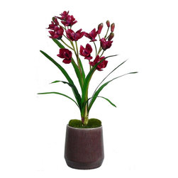 Laura Ashley - Laura Ashley Red Orchid in Ceramic Container - Constructed from Plastic, polyester, foam, moss, glue, wire, ceramic. Planter-Container Included. Lifelike silk orchid arrangement in a contemporary container. No need to shop for a planter separately - comes complete with decorative planter. High quality artificial orchid plant offers years of beauty with virtually no maintenance. This stunning orchid adds color and beauty to any room. Elegance is the feeling you get with this orchid plant. 20 in. L x 19 in. W x 29.5 in. H (6 lbs.)The Laura Ashley brand is known for quality and distinctive design, the mark of timeless beauty and relaxed living - and this lifelike silk plant fulfills those expectations. The luxurious red orchid in this arrangement will instantly liven up your home or office decor - with no maintenance. The orchid is surrounded by leaves that adds to the realist look, and there is no need to shop for a planter separately - the planter pictured is included. Plants add a feeling of life to a room, making it warmer and more welcoming; artificial plants let you decorate without concern for water damage, trimming, or soil. This high quality orchid arrangement is brought to you by Vintage Home - setting the standard in permanent botanicals, Vintage Home products feature real touch technology to bring you a richer and more realistic plant.