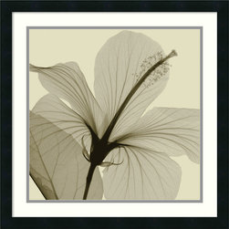 Amanti Art - Hibiscus Framed Print by Steven N. Meyers - Photographer Steven N. Meyers captures the elegance and fragility of a hibiscus in this x-ray photo. This print comes designer framed and matted, so you can hang it up as soon as it arrives.