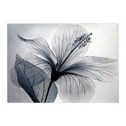 Matthew's Art Gallery - Oil Painting Modern Art on Canvas White Flower Nirvana - The Painting: