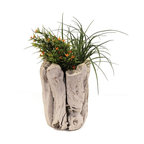 ParrotUncle - Home Decor White Finish Driftwood Plant Holder - Simple images but they are close to the real life,showing the beauty of nature and decorate your life.