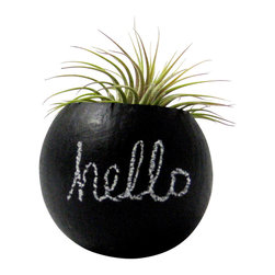 """Air Plant Mini Container Pod - Hello Chalkboard // Black // Home Decor - These air plant pods are natural pods that have been handpainted and repurposed into a planter so each pod is unique and organic in size/shape. Inscribe your own message and give this air plant pod some of your personality! Wipe with a dry cloth to change message.  The chalkboard pods are approximately 2"""" - 2 1/2"""". The plant pods would look great displayed along a shelf, desk, or window sill."""
