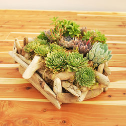 Beach Wood Succulent Garden - Crafted to resemble driftwood, this container is the perfect way to set off a lush garden of succulents. The garden can be placed either indoors or out. Succulents are included.