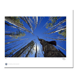 "Coconino National Forest 72, Limited Edition, Photograph - ""Coconino National Forest 72 is a photograph of birch and pine trees in The Coconino National Forest outside Flagstaff, Arizona.  Technical Information:  This is a limited edition photograph produced on Epson Premium Presentation Fine Art Matte Media using an archival pigment. Each photograph is produced, signed and numbered by the artist. Only one hundred or fewer prints are produced in each series. Prints are delivered in a crystal clear presentation sleeve supported with a white backing board.   On 8.5 x 11 media the printed image is 6 x 9 inches, leaving a one inch white border. This white border allows for for easy framing with or without a matte. Perfect for small spaces that need a splash of unique artistry.  Please feel free to contact me with any additional questions you may have."""