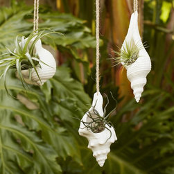 Hanging Shell Planter - These hanging shell planters are made of resin and hung from woven rope. They're a perfect gift for moms who love coastal decor.