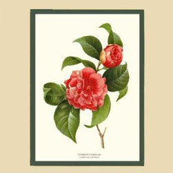 Camellia, Common Rd Flower Botanical Print - 11x14 Print - 16x20 Cream/Green Mat - Vintage style botanical flower art print from turn of the 19th century illustrations.