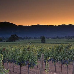 Walls 360, Inc. - Vineyards on a Landscape, Napa Valley Panoramic Fabric Wall Mural - Transform your empty walls with Walls 360's premium, repositionable wall graphics.