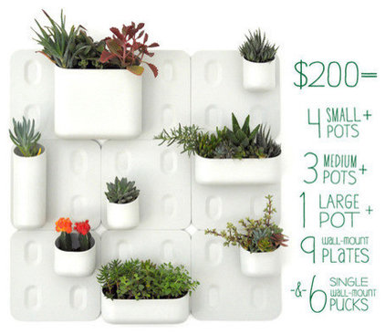 Contemporary Indoor Pots And Planters by Beau Oyler