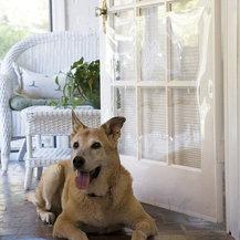 Shop Pet Door Products On Houzz