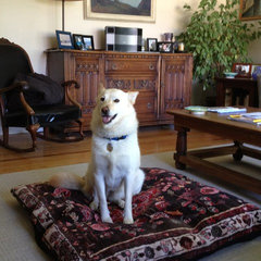 eclectic pet accessories by Royal Shiva Floor Pillows and Dog Beds