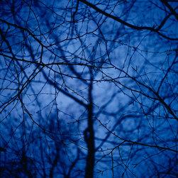 Blue Tree #2 - Trees Series - Selected by Susan Spiritus, Director, Susan Spiritus Gallery, Newport Beach, CA as juror.