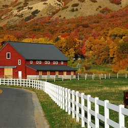 MyBarnwoodFrames - Mapleton Red Barn Tom Nielson Print, 20x30 - A  20x30 size photograph of a mama  cow  and  her  calf  are  not  too  concerned  about  preening  for  the  photographer,  since  the  big  red  barn  and  the  shimmering  autumn  colors  in  the  background  are  competing  for  the  viewer's  attention  anyway.  This  colorful  mountain  valley  fall  day  is  picture  perfect.                                                                          Choose  Your  Frame  Style                                                                         250  Classic                                  250  Sangria                                  315  Classic                                                  350  Classic                                  385  Classic                                  385  Espresso                                                  385  Honey  Alder                                  400  Classic                                  400  Honey  Alder