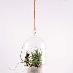 Twig Terrariums - Twig Terrariums Encapsulate Air Plant Terrarium Kit Multicolor - ENCAPSULATE - Shop for Planters and Pottery from Hayneedle.com! The Twig Terrariums Encapsulate Air Plant Terrarium Kit is easy to set up hang and care for offering the decorative benefits of verdant green with minimal effort and maintenance. This air plant kit includes the best quality tillandsia and a modern-style capsule and string for hanging in bright indirect light.About Twig Terrariums:Twig Terrariums was founded as a creative venture by two old friends in New York City. Their experimentation and epic antiquing adventures produced a unique collection of funny whimsical soothing and romantic scenes that have charmed collectors throughout the country. Twig has been featured in The New York Times The New York Botanic Gardens Country Living and Everyday with Rachael Ray among other places. Their handmade terrariums DIY kits and string gardens make great gifts or quirky additions to home or office offering low-maintenance durability and daily enchantment.
