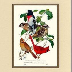 Grosbeaks-Cardinals Bird Print - 8x10 Print - 11x14 Cream/Gold Mat - Antique bird prints from turn of the 19th century illustrations by reknowned artist James Audubon, Louis Agassiz Fuertes, John Gould and others. Available in multiple sizes.
