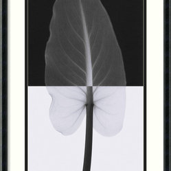 """Calla Leaf I"" Framed Print by Steven N. Meyers"