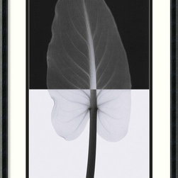 Amanti Art - Calla Leaf I Framed Print by Steven N. Meyers - This ghostly print of the calla lily will look hauntingly beautiful on your wall. Anyone seeing it for the first time will pause to look more closely at how Steven N. Meyers stunningly showcases the intricate inner workings of nature's creation.