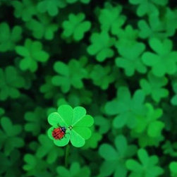 Wallmonkeys Wall Decals - Ladybug on Four Leaf Clover Wall Mural - 36 Inches H - Easy to apply - simply peel and stick!
