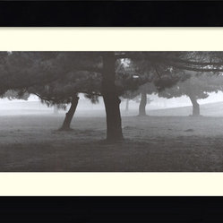 Trees in the Fog Framed Print by Richard Calvo