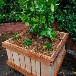 "Rolling ""Yards"" 3 x 3' x 28"" Tree Planters - Kurt Preissler"