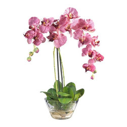Phalaenopsis with Glass Vase Silk Flower Arrangement - Standing twenty inches high, this grand member of the orchid family is sure to make a spectacular impression. A mix of brightly hued petals graced by two delicate buds add a simple yet elegant touch. Perfect for a dining room centerpiece, this attractive Phalaenopsis arrangement is adorned by lush green leaves. A delicate round glass vase adds the perfect finishing touch to this floral masterpiece. Height= 18 in x Width= 16 in x Depth= 7 in