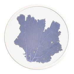 Framed Sea Fan 24 Round in Sea Lavendar - Choose a wall in your home with an intriguing color and bring that favorite shade to life by hanging a round sea fan artwork on it.  Authentic sea fans are carefully selected and prepared to serve as the focal of these artworks, then pressed between panes of glass to preserve and display them.  A hand-finished silver frame surrounds the sea fan, letting you enjoy oceanic texture along with the unique pleasure and appeal of round wall art.