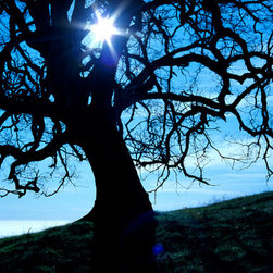 """Blue Tree - C-print, unmanipulated transparency film image, 20""""x30"""" image size, 24""""x34"""" paper size, edition of three c-prints, edition of three pigment prints. Signed, numbered and captioned in ink on the verso."""