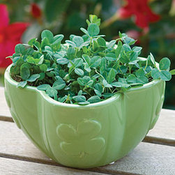 """Grow Some Luck Garden - Can't find a four-leaf clover in your yard?  No problems,  grow your own with a """"Grow Some Luck Garden.""""   This little kit comes with a ceramic shamrock container, 2 coir growing pellets, Shamrock seeds and complete growing instructions.  How exciting would it be if a four-leaf clover turned up! Then you could press it between the pages of a book and keep it forever."""