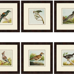 """Paragon Decor - Birds, Set of 6 Artwork - Liven up those boring walls with this dynamic set of 6, """"Birds."""" Each piece in this set features a rendering of a different type of bird perched atop a branch or standing on the ground. Each piece has its own unique composition, but the set finds its cohesion in its shared style and color scheme. Each piece is surrounded by an off-white matte and placed within a simple black frame. Each piece in this set measures 17 inches wide, 1 inch deep, and 17 inches high."""