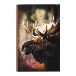 "Big Moose Portrait Wall Art - A close-up moose is captured by photographer Denver Bryan on the gallery-wrapped canvas Big Moose Portrait Wall Art with decorative edges and a finished back. Keyhole hanger. Measures 16""W x 1""D x 24""H. ~"
