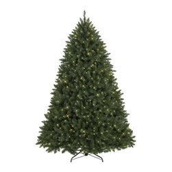 Susquehanna River Pine Christmas Tree - GATHER AROUND THE GLOW OF THE SUSQUEHANNA RIVER PINE CHRISTMAS TREE