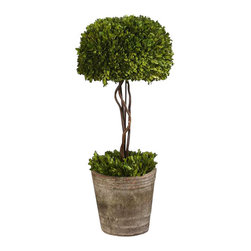Uttermost Tree Topiary Preserved Boxwood - Preserved while freshly picked, natural evergreen foliage looks and feels like living boxwood. Single topiary is potted in mossy stone finished, terra cotta planter. Preserved while freshly picked, natural evergreen foliage looks and feels like living boxwood. Single topiary is potted in mossy stone finished terracotta planter.