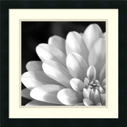 Amanti Art - Radiating Petals Framed Print - Embrace the timeless natural beauty in this image of Radiating Petals. This black and white photo explores the elegance of a gerbera daisies petals.