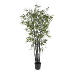 6.5' Black Bamboo Silk Tree - Add a touch of flair to your neutral home decor with this rare and exotic Black Bamboo Tree. Well known for its hardiness, this elegant looking bamboo will thrive without any water, sunlight, or pruning. Bright slender crisp leaves are a nice contrast to the deep rich color of its trunk. A full 6 feet tall, this unique tree contains over seventeen-hundred authentic styled leaves. A basic black pot blends well with the dark colored trunk. Height= 6.5 ft x Width= 37 in x Depth= 37 in