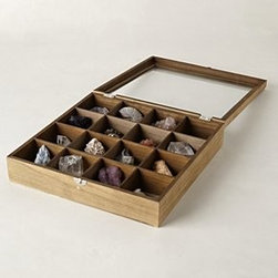 Anthropologie - Curio Collector's Box - *Includes assorted natural fossils and rock specimens