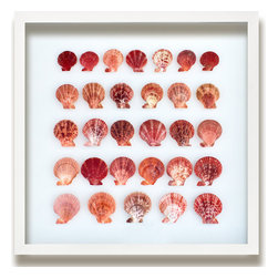 Kathy Kuo Home - Langley Coastal Beach Coral Pectin Shell Wall Decor by Karen Robertson, Coral - No two shells are alike, and nowhere is this fact more evident than in this stunning collection of pectin shells. Each with a unique pattern and variety of coral and pink shading, this grouping of shells showcases the natural beauty of the sea. Hang this in your home for a distinctive oceanic effect.