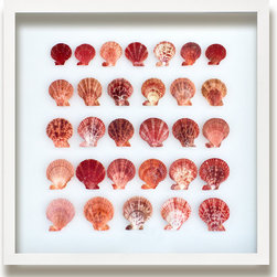 Kathy Kuo Home - Langley Coastal Beach Coral Pectin Shell Wall Decor - by Karen Robertson - No two shells are alike, and nowhere is this fact more evident than in this stunning collection of pectin shells. Each with a unique pattern and variety of coral and pink shading, this grouping of shells showcases the natural beauty of the sea. Hang this in your home for a distinctive oceanic effect.