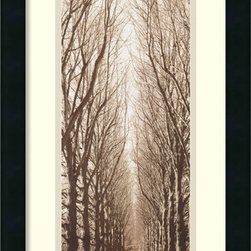 Amanti Art - Poplar Trees Framed Print by Alan Blaustein - This captivating image by photographer Alan Blaustein revels in the rich variation of tone produced by filtered light, making the trees appear much more complex than mere silhouettes.