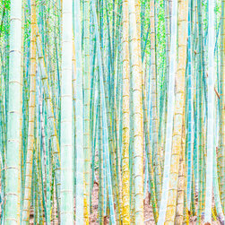 PrintedArt - Colorful Bamboo - Print is made with archival pigment inks for best color saturation and contrast with a 75-year guarantee against fading or discoloring. Face-mounted to optically clear acrylic to create a float-on-the-wall piece of art. Also available mounted on aluminum dibond boards.