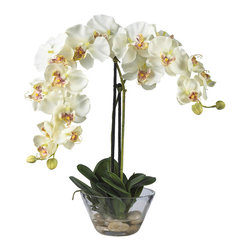 Nearly Natural - Phalaenopsis with Glass Vase Silk Flower Arrangement - Standing twenty inches high, this grand member of the orchid family is sure to make a spectacular impression. A mix of brightly hued petals graced by two delicate buds adds a simple yet elegant touch. Perfect for a dining room centerpiece, this attractive Phalaenopsis arrangement is adorned by lush green leaves. A delicate round glass vase adds the perfect finishing touch to this floral masterpiece.