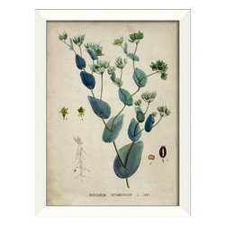 "The Artwork Factory - Bupleurum Botanical Framed Artwork - Bupleurum Rotundifolium, also known as ""Green Gold,"" is depicted with the exacting hand of a botanical artist in this vintage inspired print. The beautiful, museum quality print comes elegantly framed in white wood and would look lovely in your library, sitting room or powder room."