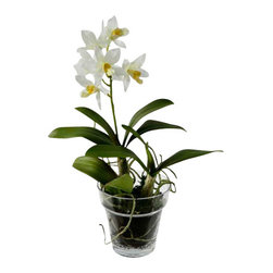 "Jane Seymour Botanicals - Dendrobium Orchid in Glass Pot, White - The delicate, diminutive dendrobium orchid brings a lush, exotic touch to your decor. But shh! These potted blooms are ""forever flowers"" that will always look this genuinely lovely."