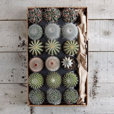 Contemporary Plants by West Elm