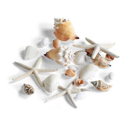 Frontgate - Assorted Sea Shells Pack - Includes three Starfish, four Brown Aninicad Shells, four Litob Shells, four Nautica Paciata Shells, two Strombus Pugilis Shells and six Bubble Shells. Suitable for use indoors or outdoors. Makes the perfect accessory. Make a beautiful oceanfront presentation reminiscent of your favorite sun-soaked, seaside destinations. Accessorize any hurricane lantern with our Assorted Seashell Pack, featuring real shells and dried starfish.  .  .  . Imported.